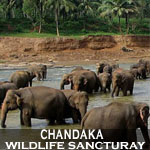 chandaka-wildlife-sancturay