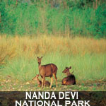 nanda-devi-national-park